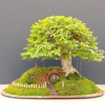 Ornamentals Plants