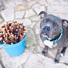 Dog Chew Bones