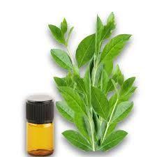 Herbal Henna Oil