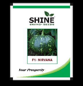 Pumkin Seeds- F1 Nirvana