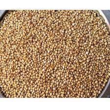 Organic Jowar Seeds