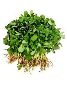 Green Methi Leaves