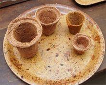 Coconut Coir Seed Germination Cups