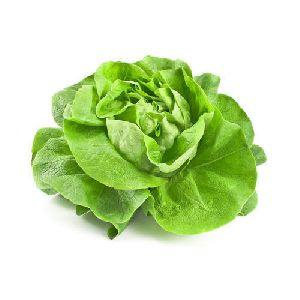 Natural Lettuce
