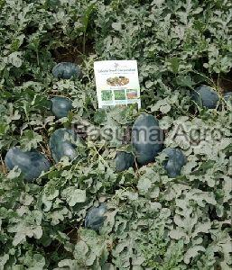 F1 Hybrid Icebox Watermelon Seeds