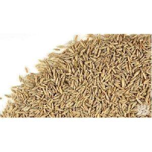 White Cumin Seeds