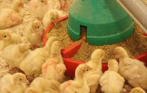 Poultry Feed in Andhra Pradesh - Manufacturers and Suppliers India