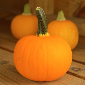 Hybrid Pumpkin Seeds