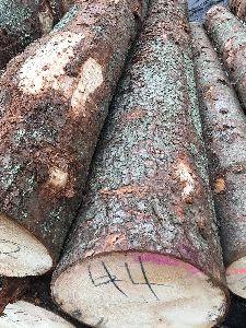 Round Wood Logs
