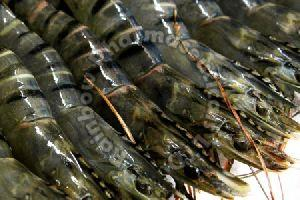Black Tiger Shrimp