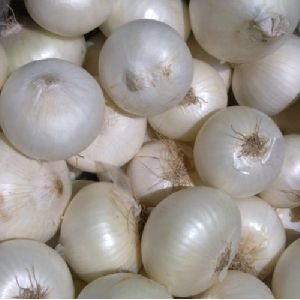 Indian White Onion