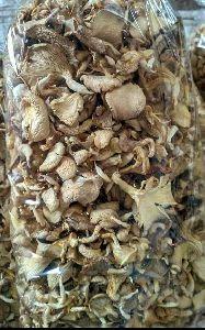 Dry Organic Oyster Mushroom