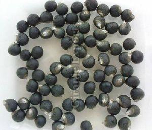 Hybrid Okra Seeds