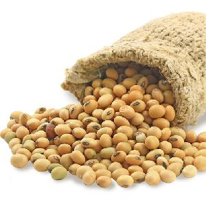 Dried Soybean Seeds