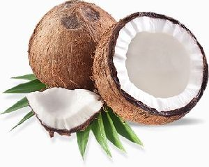 Coconut in Uttar Pradesh - Manufacturers and Suppliers India