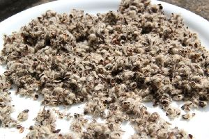 Dried Cotton Seed Hull
