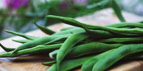 Fresh Organic Beans