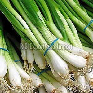 Fresh Green Spring Onion