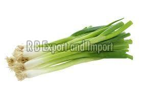 Fresh Natural Spring Onion