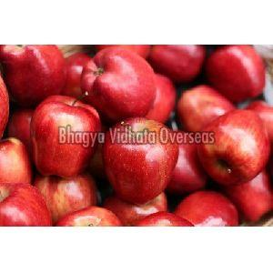 Organic Red Apple