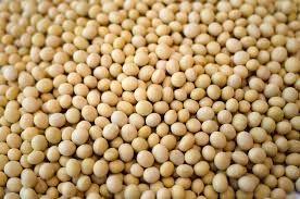 Non GMO Soybean Seeds