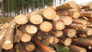 Pine Eucalyptus Logs