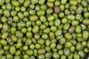 Polished Green Moong Dal