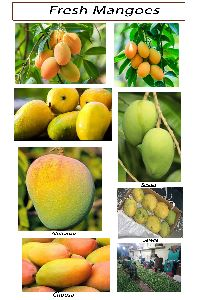 Mango in West Bengal - Manufacturers and Suppliers India
