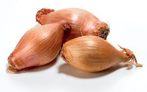 Yellow Shallot Onion