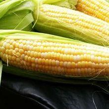 Modified Maize Starch