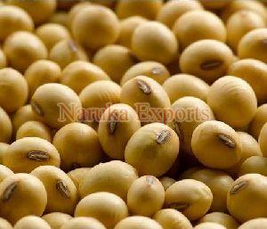 Natural Soybean Seeds