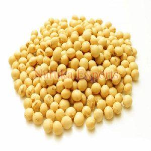 Yellow Soybean Seeds