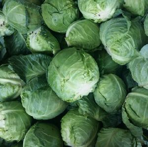 Fresh Natrual Cabbage