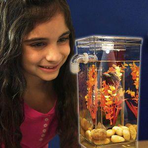 Fish Cleaning Tank Fish Aquarium