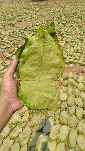 Dry Tendu Leaves
