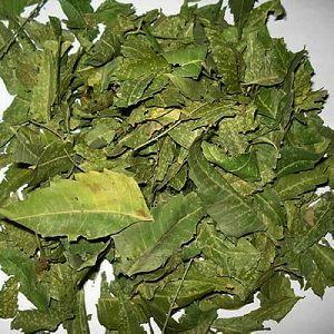 Dry Neem Leaves