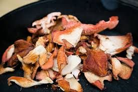 Dried Pink Oyster Mushrooms
