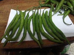 Fresh green chille