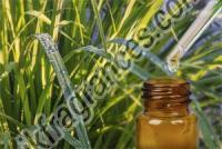 Organic Citronella Oil