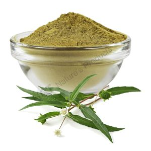 Bhringa Powder