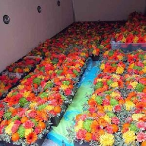 Flower Cold Storage Room