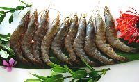 Vannamei shrimp