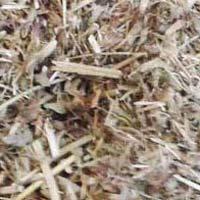 Organic Stem Herbs