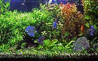 Tropical Aquariums