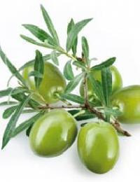 Olive Leaf Extract (oleuropein 20%,40%)