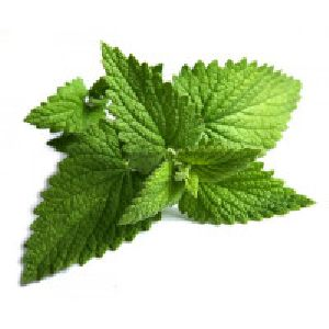 Organic Mint Leaves