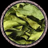 Curry - Leaves