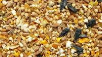 Broiler Chicken Feeds