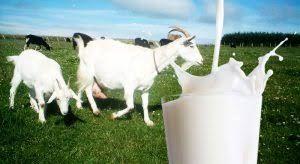 Milk Goat Milk