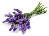 Dehydrated Lavender Flowers